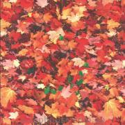 Картон Осенняя листва