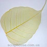 Листик скелетированный широкий желтый