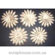 Цветы астра кремовые