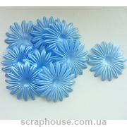 Цветы астра голубые