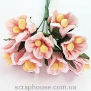 Крокусы розовые 5 шт.