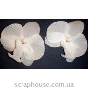 Головки цветов орхидеи белые 2 шт.