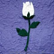 Aппликация Роза белая