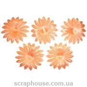 Цветы астра персиковые