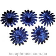 Цветы астра синие