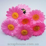 Головки цветов ромашки розовые