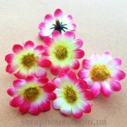 Головки цветов ромашки бело-розовые
