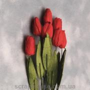Тюльпан DEEP RED