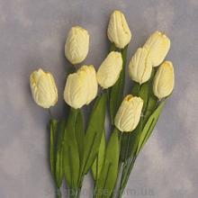 Тюльпан IVORY