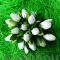 Тюльпаны белые с зелеными листиками