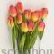 Тюльпан YELLOW/RED